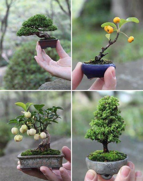 bonsai-plants-for-garden